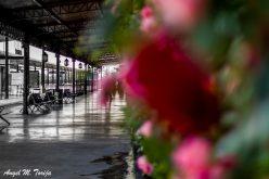 Estación de Ferrocarril de Toledo. Primavera.